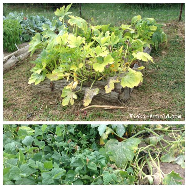 Vicki, Vicki, how does your garden grow? Like this.
