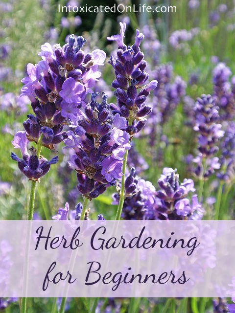 Herb Gardening for Beginners on Intoxicated On Life