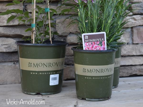 Monrovia plants | Vicki-Arnold.com